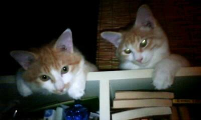 猫算家族 7