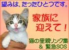 猫の里親リンク集